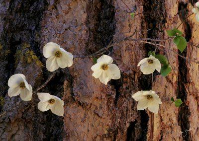 Vine flowers against tree bark