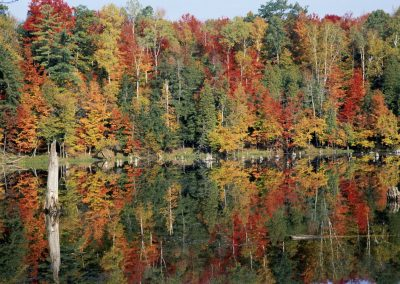 Trees reflecting off of the water