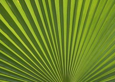 Palm tree leaf close up