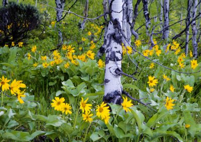 Flowers with dead trees