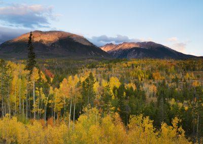 Trees with mountain range