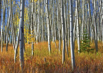 Dense forestry in fall