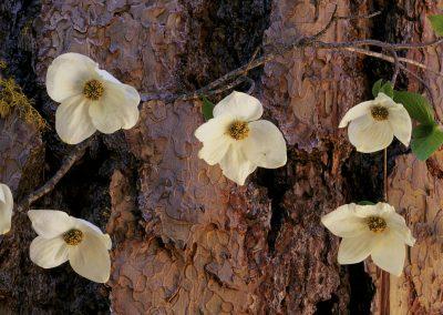 Flowers against tree bark