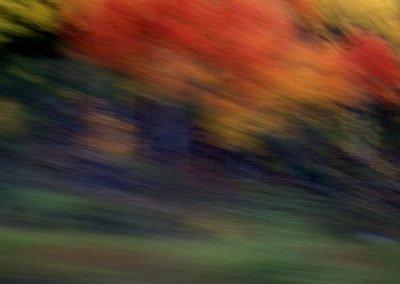 Blurred photo of autmn trees