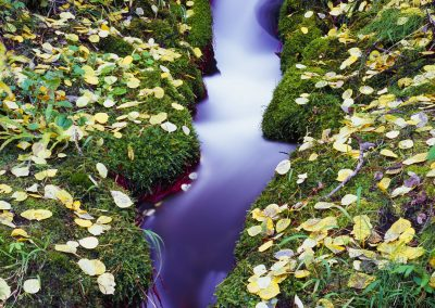Close up river with flowers