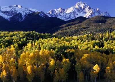 Flower field and mountain range