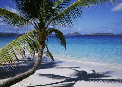 Palm tree on a crystal clear beach