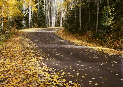 Autumn leaves on road in forest